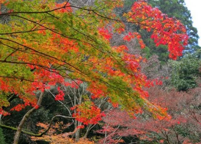 miyazaki-takachiho-valley-autumn-leaves