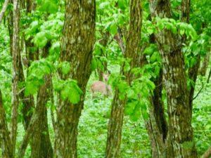 kushiro-wetland-sarubo-ezo-deer