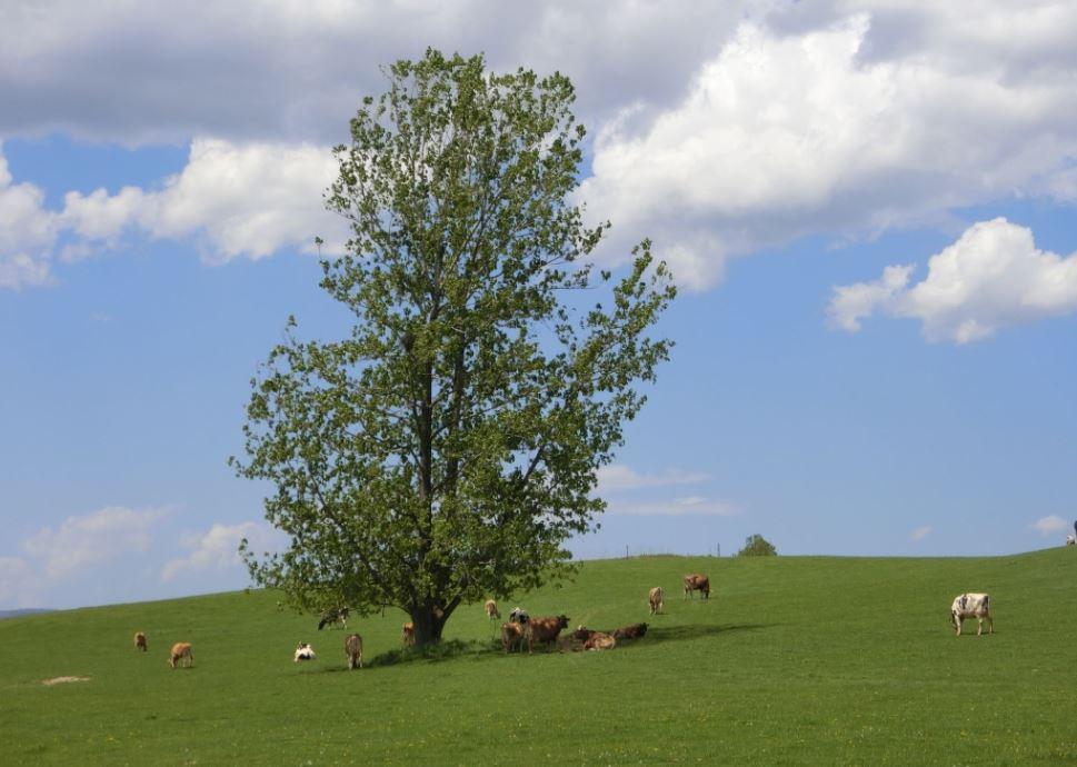 farm-and-tree