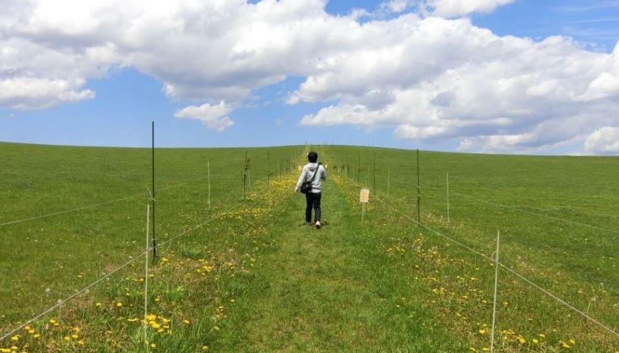 biei-farm