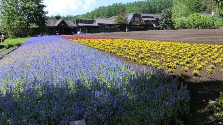 farm-tomita-flower-garden