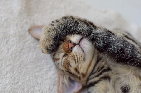 cat-holding-head