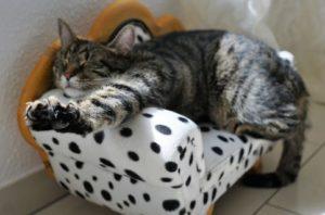 cat-streching-body